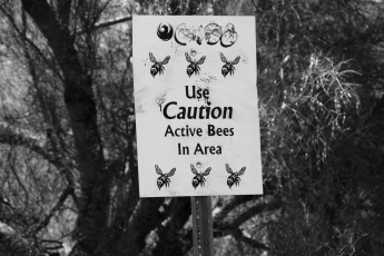 "WTF is an ""active bees"" area? Is this an AZ thing?"